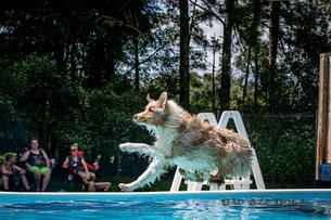 Dogwalker-Sep14-2019-337