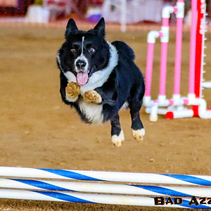 Mid Florida All-Breed Agility