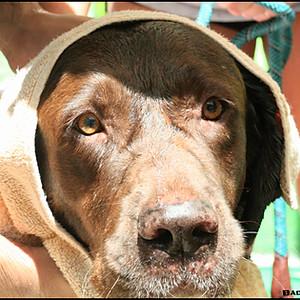 PAW Aug Dog Wash