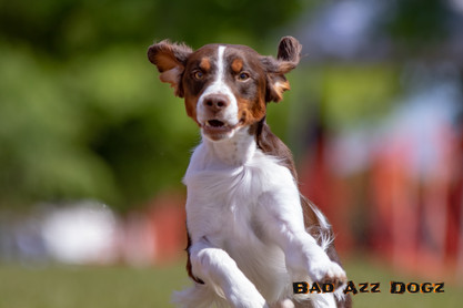 Suwanee Fast CAT 2019-662