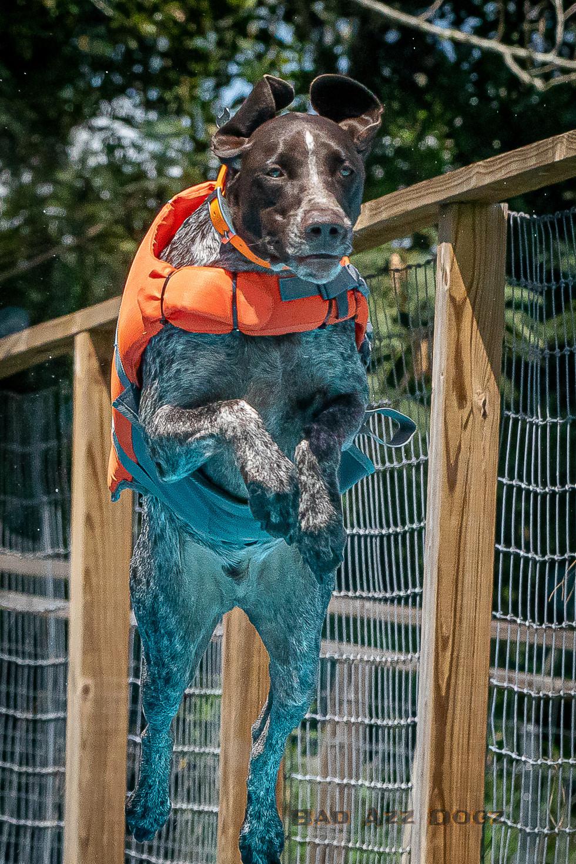 Dogwalker-Sep14-2019-369