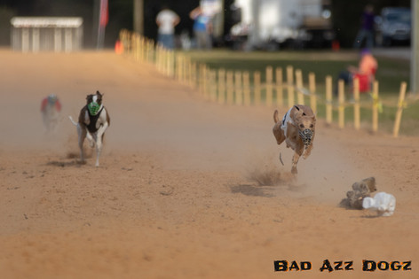 Lure-Race1-12-18-109