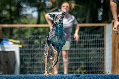 Dogwalker-Sep14-2019-350
