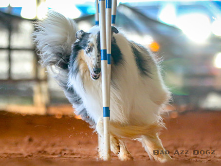 AKC Agility at Pirate Cluster 2019