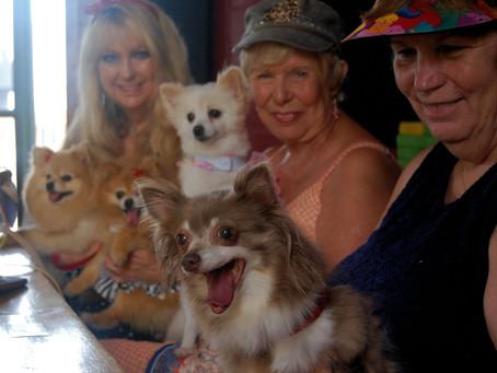 PAW Doggy Fashion Show