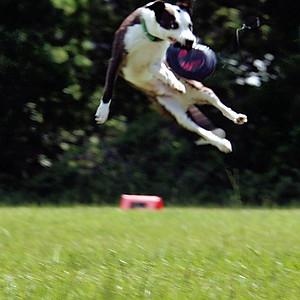 Skyhoundz Qualifier CFDDC