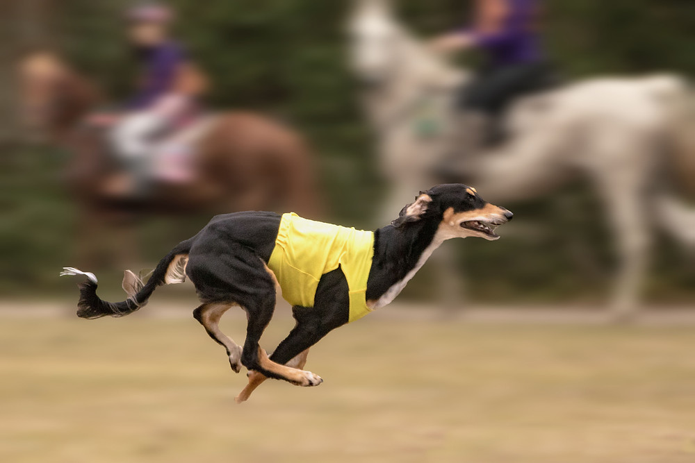 The Dogs stole the show at the Florida Horse Park