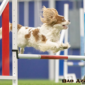 Bratty Paws Agility - Indoor