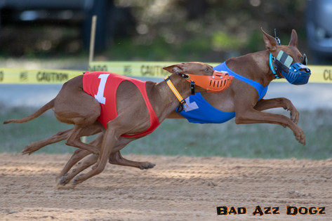Lure-Race1-12-18-113