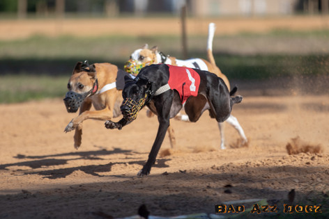 Lure-Race1-12-18-132