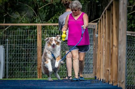 Dogwalker-Sep14-2019-177