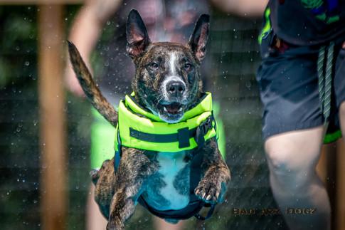 Dogwalker-Sep14-2019-240
