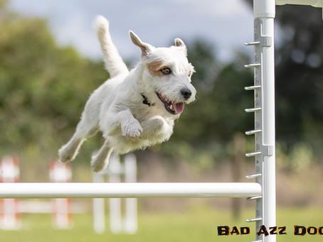 Bratty Paws Dog Plex