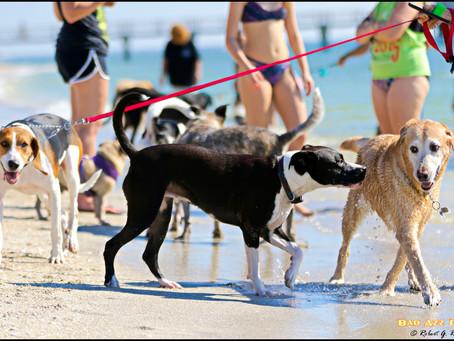 Pet Pals beach Reunion
