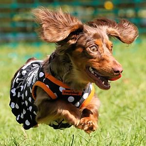 Wiener Race Weekend 2018