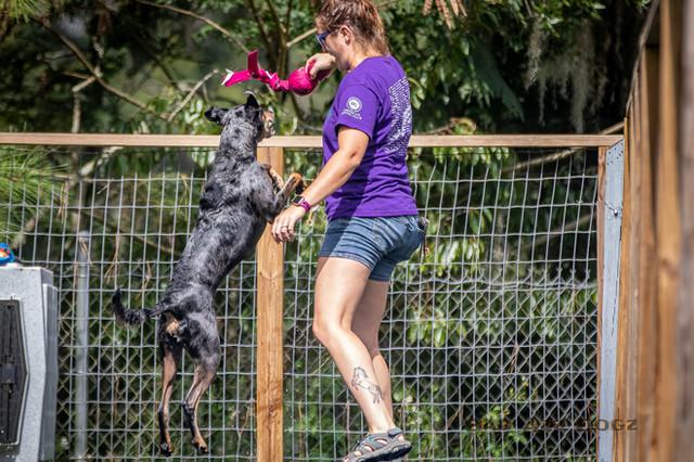 Dogwalker-Sep14-2019-175