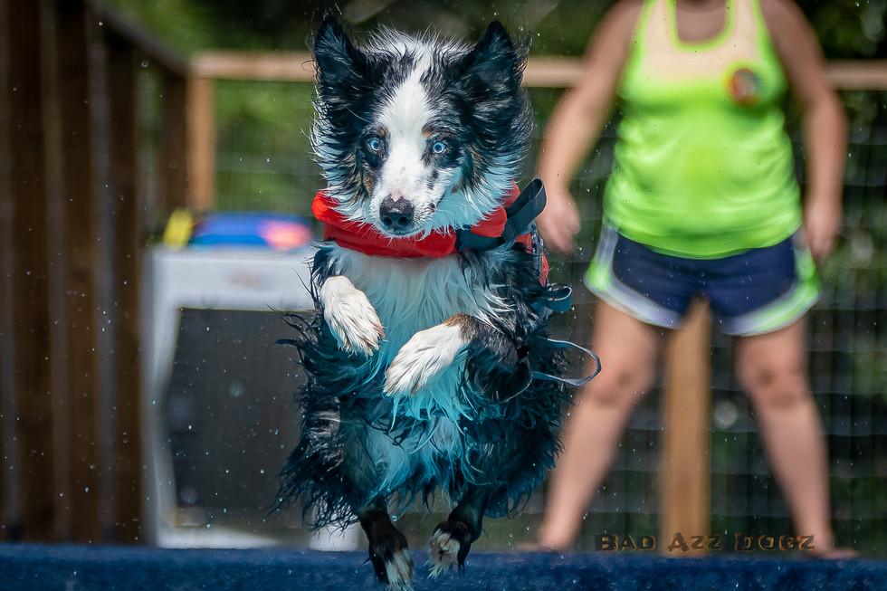 Dogwalker-Sep14-2019-169