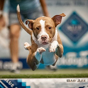 Dock Dogs | F & S Expo, FL