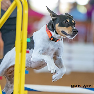 All Breed Agility at Grand Oaks