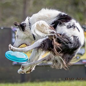 Hero Dogz & Wind Warriors