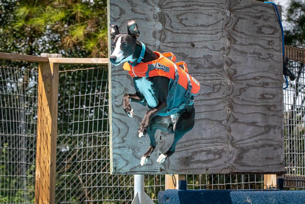 Dogwalker-Sep14-2019-322