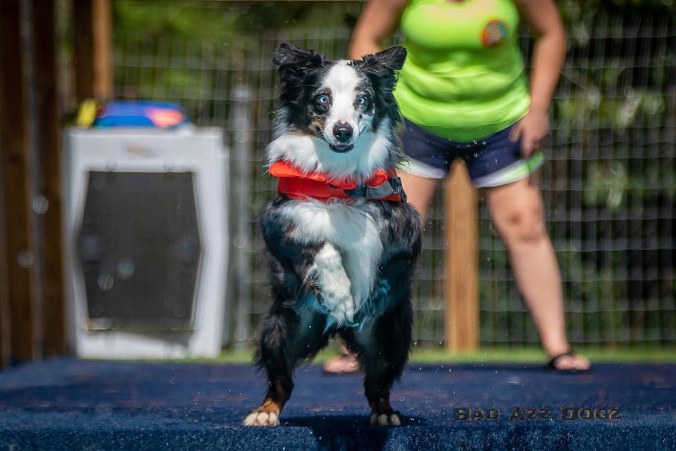Dogwalker-Sep14-2019-162
