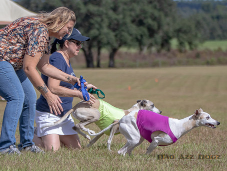 Photo-Feature: Lure Coursing in the Florida Autumn
