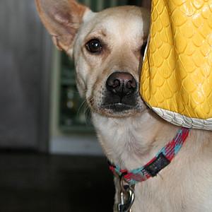 PAW June Dog Wash