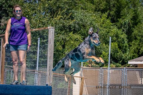 Dogwalker-Sep14-2019-349