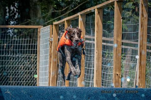 Dogwalker-Sep14-2019-366