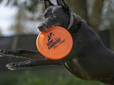 Wind Warriors Disc Dog Club