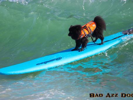 Jupiter Surf Dog Photo Feature!