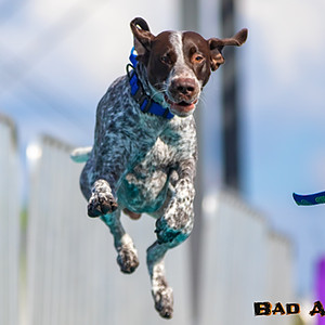 Hogs & Air Dogs 2018