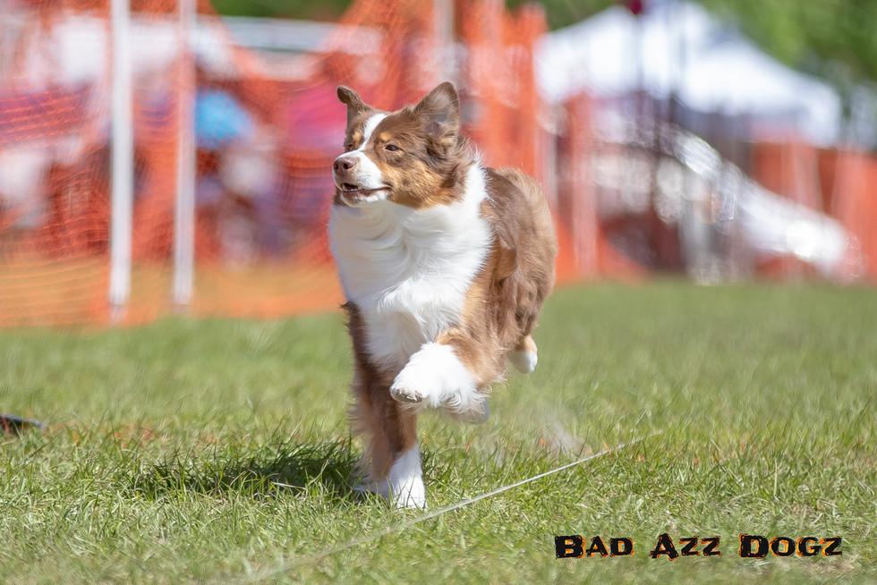 Suwanee Fast CAT 2019-329