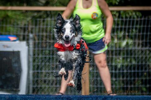 Dogwalker-Sep14-2019-168