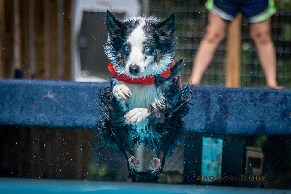 Dogwalker-Sep14-2019-170