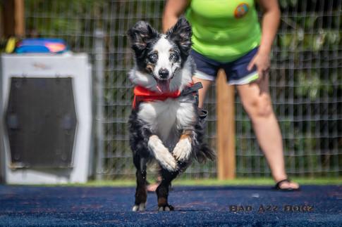 Dogwalker-Sep14-2019-160