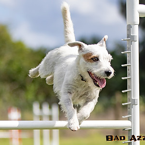 Bratty Paws Agility - Outdoor