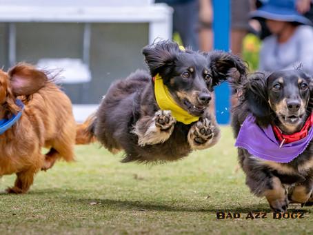 2019 Florida Wiener Dog Derby
