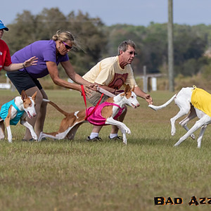 ASFA/AKC Lure Coursing Brooksville