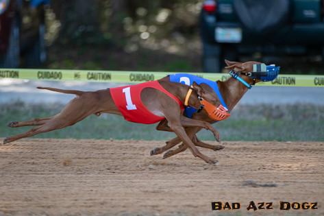 Lure-Race1-12-18-114