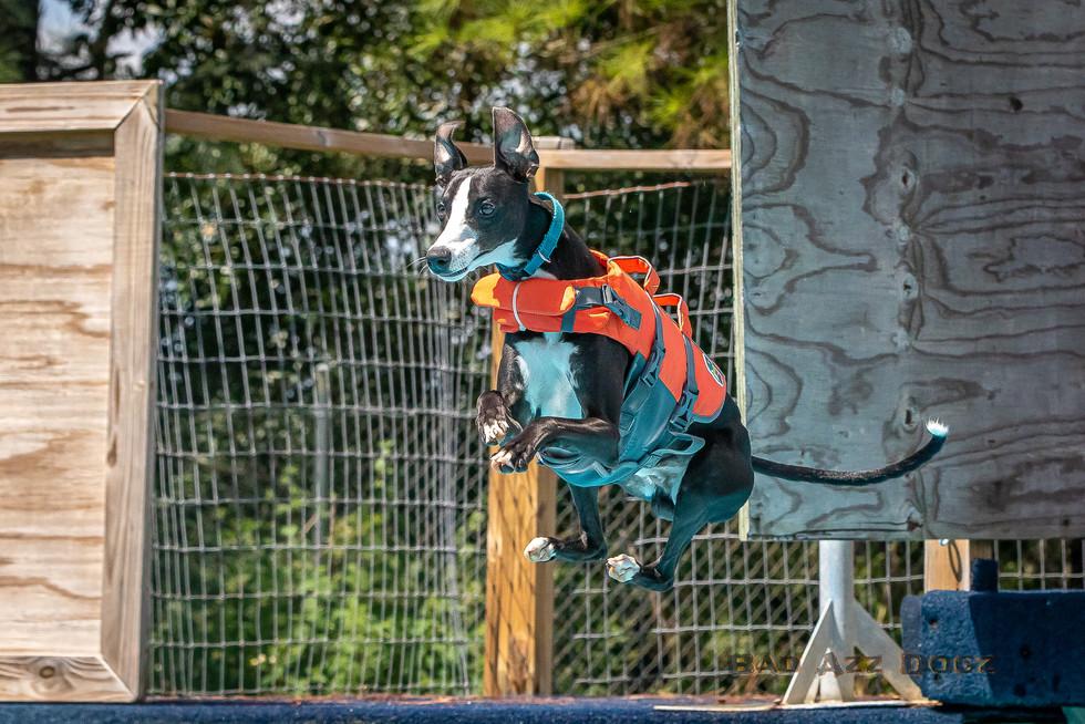 Dogwalker-Sep14-2019-323