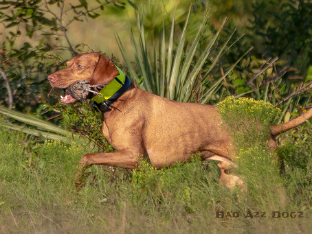 Photo-Feature: October AKC Hunt Test at NFGSPC