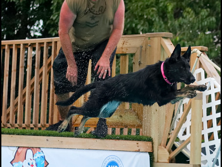 Bad Azz Diving Dogz at Ocala Dog Ranch