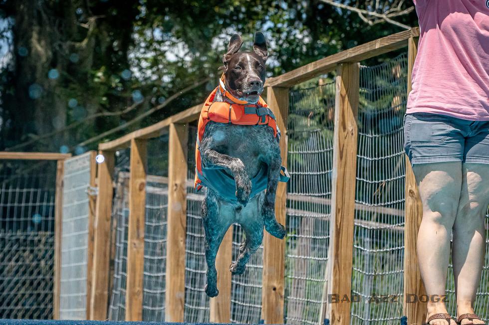 Dogwalker-Sep14-2019-368