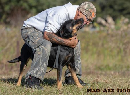 Rottweiler Rescue Ranch