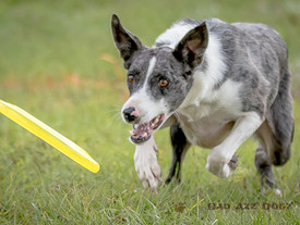 Photo-Feature: Hero Dogz & Windwarriors Disc Dogs