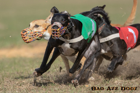 Lure-Race1-12-18-176