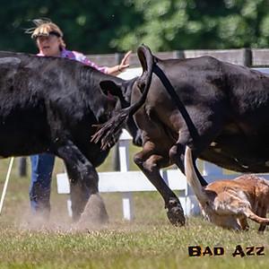 AKC Herding Trials - Acorn Acres