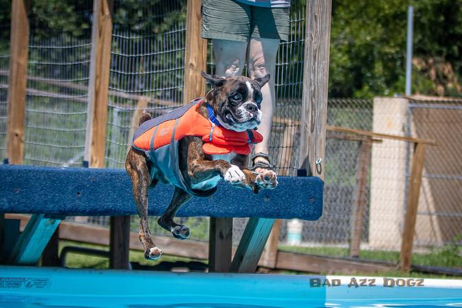 Dogwalker-Sep14-2019-281